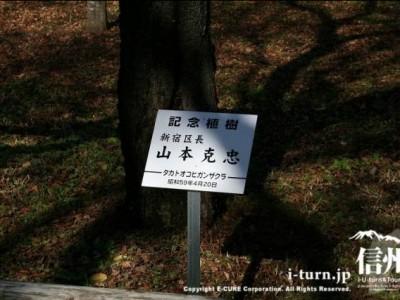 新宿区長の記念植樹、山本克忠