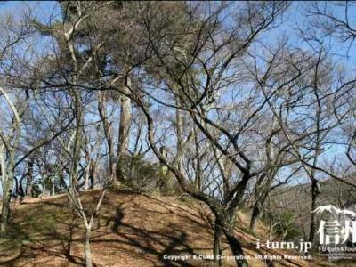 高遠城址公園冬の風景