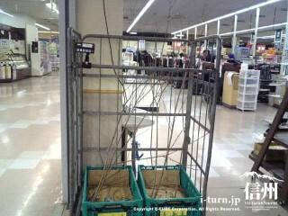 スーパーで売られる柳の枝