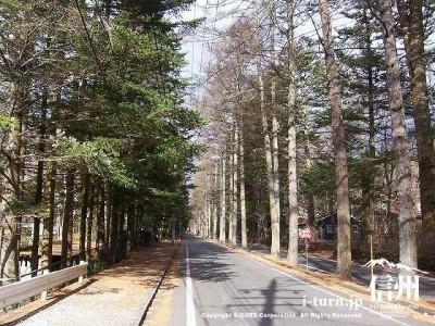 三笠通り初冬の落葉松並木