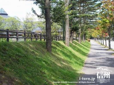 大賀通り遊歩道2