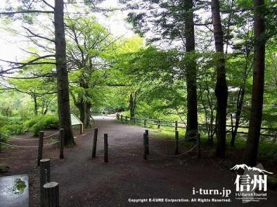 雲場池(公園入口)