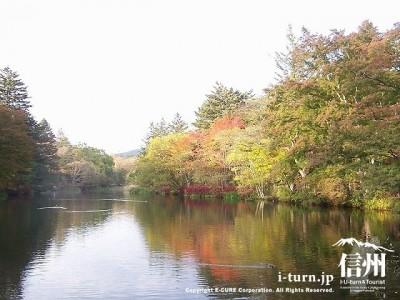 雲場池(初秋)1