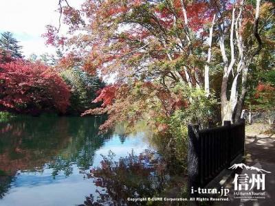 雲場池(秋)6