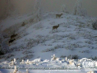 客室の窓から鹿の群れが・・・