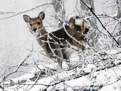 鹿にも会えます