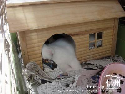 テラスにうさぎが寝てました