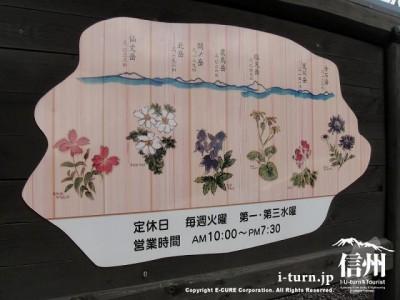 みつ蜂の看板の裏には花と山の説明