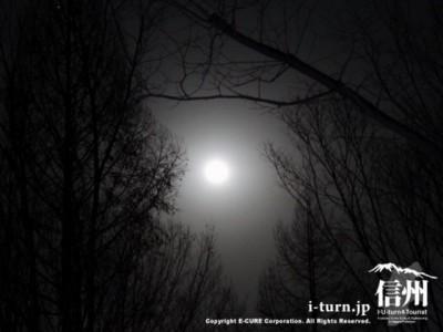 森の中から見た満月