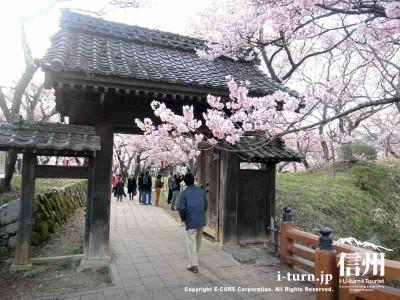 門も桜があると映えますね