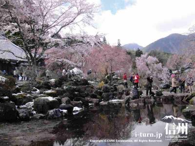 大講堂前の池と桜