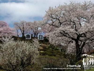 結婚式場から眺める桜