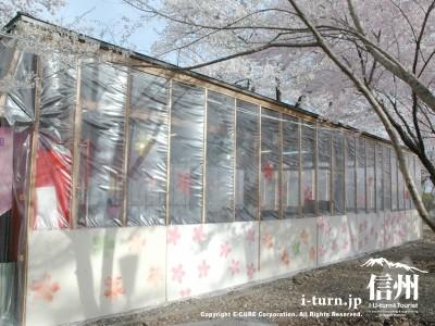 屋台を覆うシートも桜