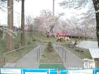桜の時期の健康歩道