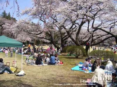 遊具側の公園は子供連れのファミリーで賑わっています