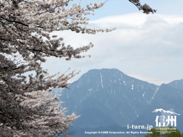 桜と有明山