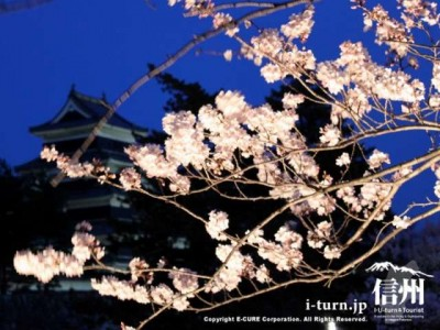 桜のバックに松本城