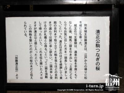 清正公駒つなぎの桜の説明