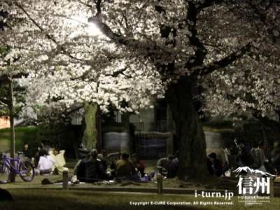 松本城公園のお花見