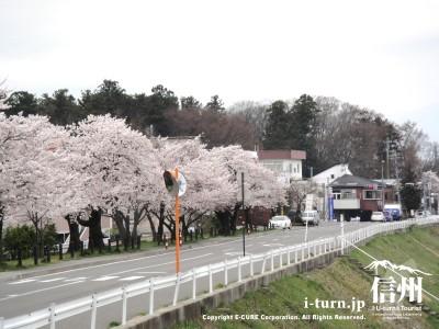 筑摩神社付近