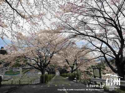 大きな桜の木もあり立派