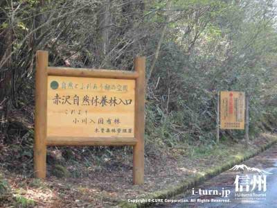 国有林に入る場所に看板
