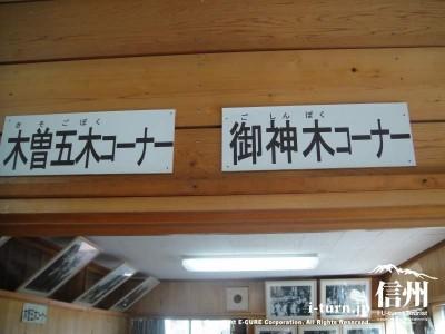 木曽五木コーナー、御神木コーナー