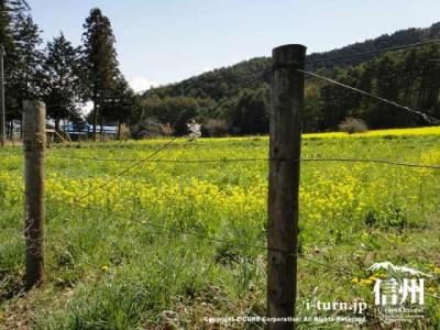 畑は柵で囲まれている