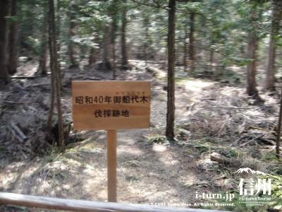 昭和40年御船代木の伐採跡地