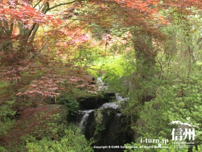 蓮華池へと流れる湧水