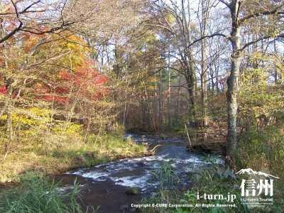 紅葉の遊歩道と湯川