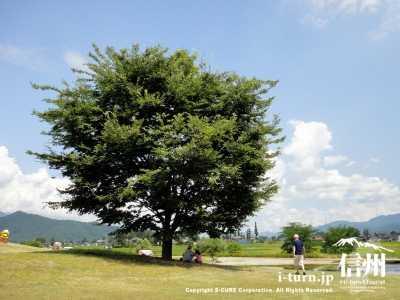 大きな木のある公園