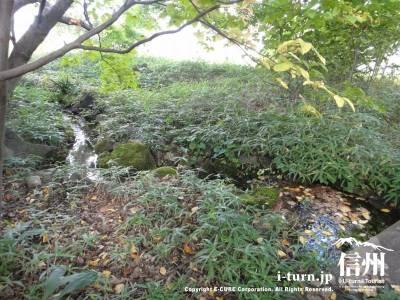 店前の林に流れる川
