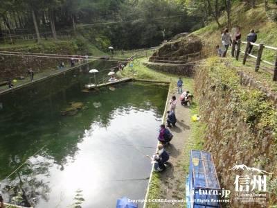 山の中ののんびりした釣り堀です