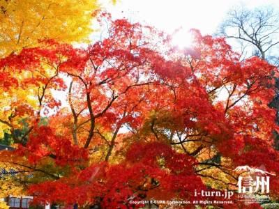 紅葉の隙間から太陽