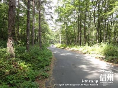 千ケ滝への車道Ⅰ