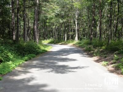 千ケ滝への車道Ⅱ