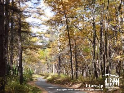 千ケ滝への車道Ⅲ(紅葉)