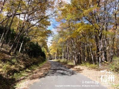 千ケ滝への車道Ⅳ(紅葉)