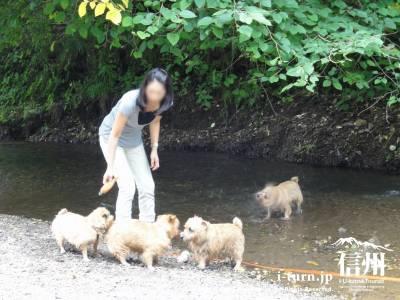 千ケ滝 水遊び場Ⅲ(子犬の水遊び)