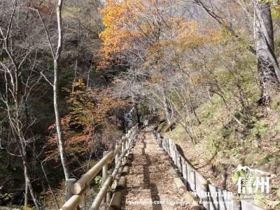 千ケ滝 せせらぎの道(晩秋の桟道)Ⅰ