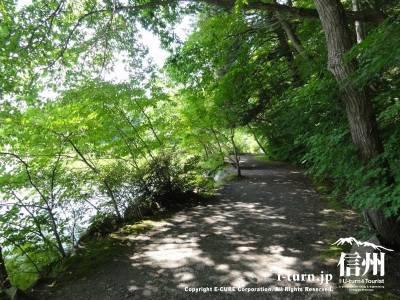 遊歩道Ⅱ(湖畔)