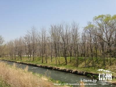 川の向こう岸に木々