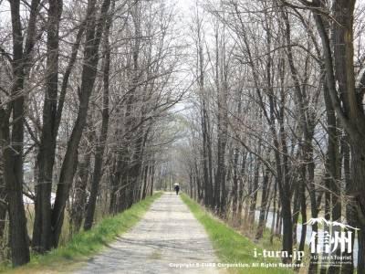 木漏れ日がきれいな道