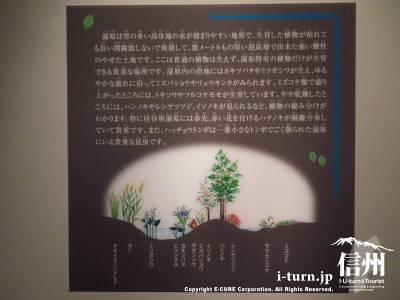湿地の説明