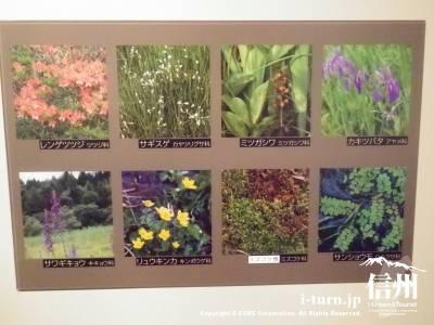 湿地の草花