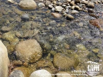 水が透明の川