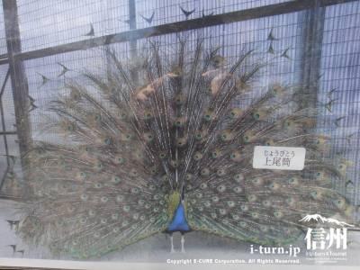 羽を広げた時の写真