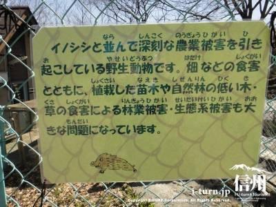 猪と同じ畑に被害をもたらす動物