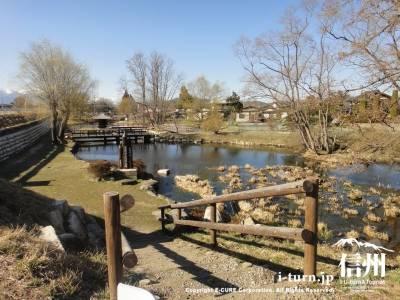 別角度からの池風景